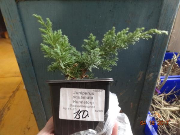комнатные растения 004