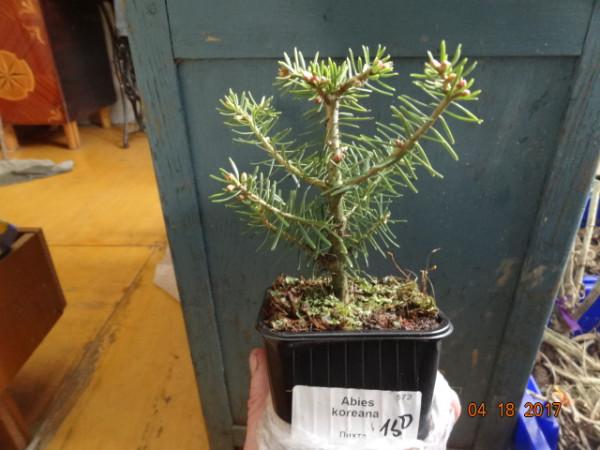 комнатные растения 005