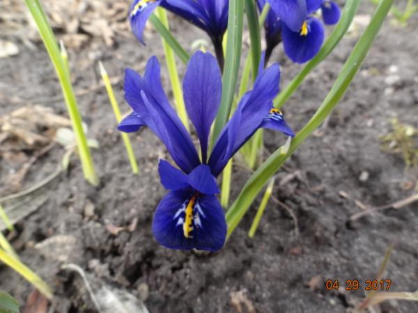 весна 052