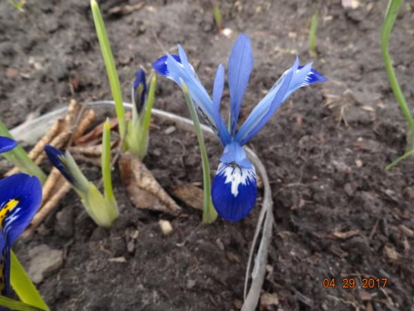 весна 050