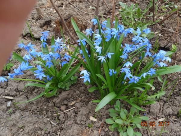 весна 065
