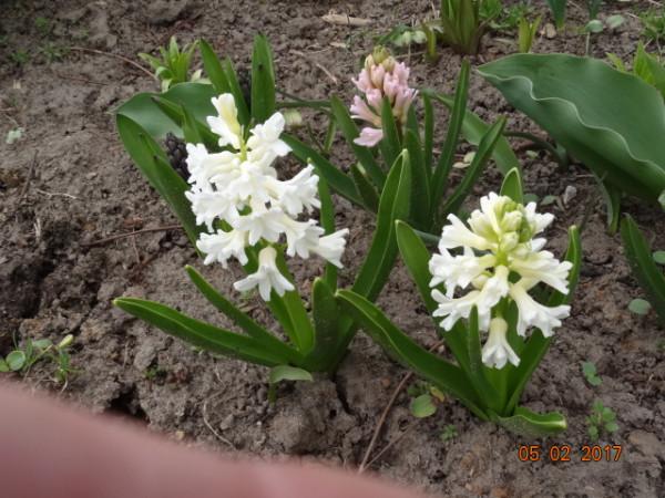 весна 066