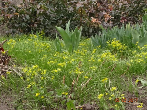 весна 058