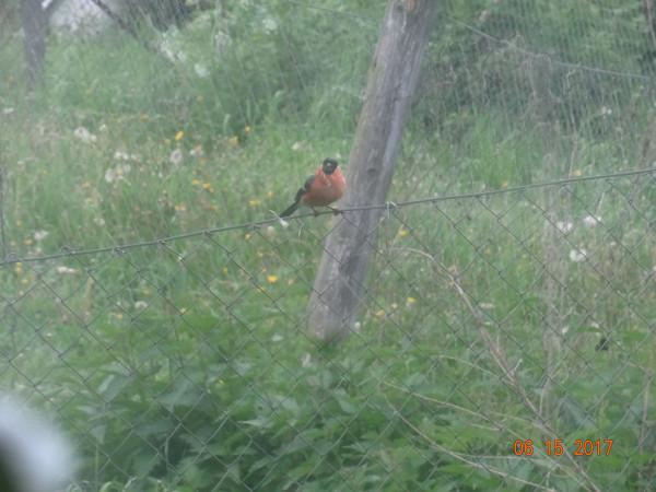 птички 035