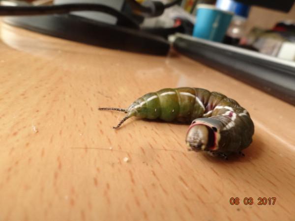насекомые 054