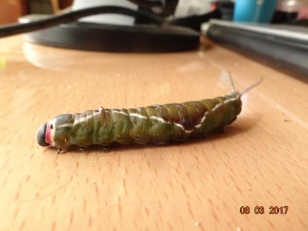 насекомые 053