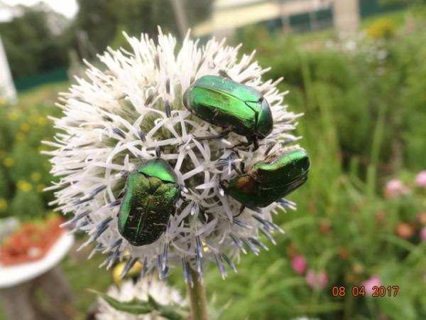 насекомые 055