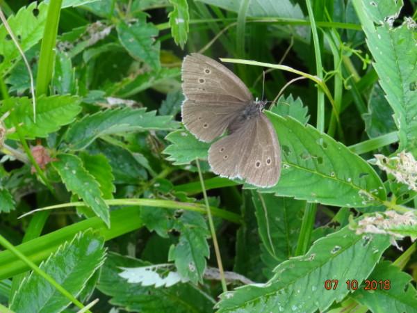 насекомые 060