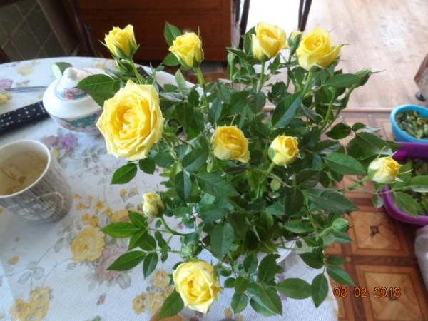 розы 060