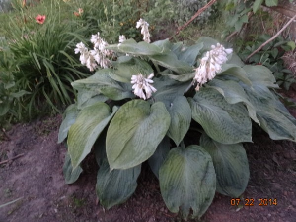 цветочки разные 075
