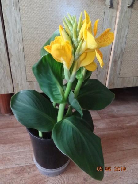 комнатные цветы 052