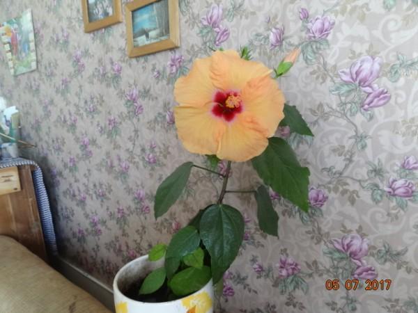 комнатные цветы 003