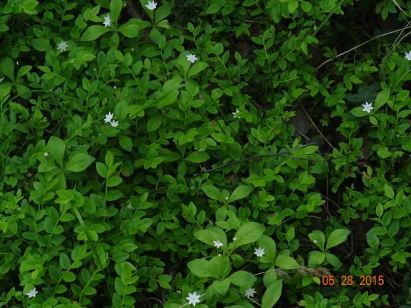 белый лес 021