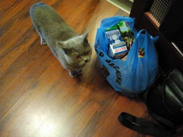 28. кот встречает с работы.jpg