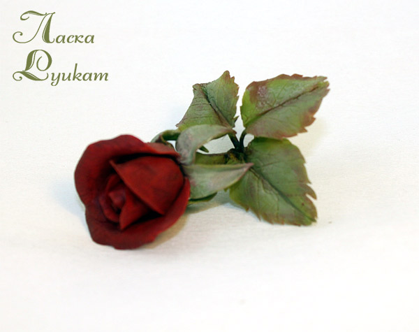 роза-красная5