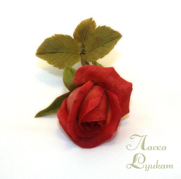 роза-красная-ветка