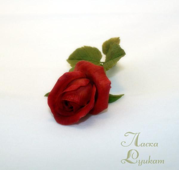 роза-красная-ветка2