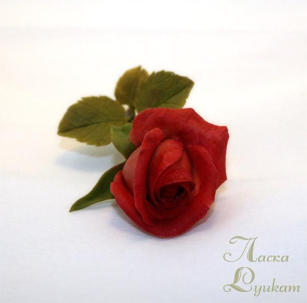 роза-красная-ветка3