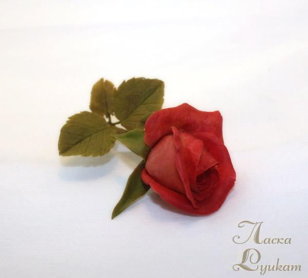 роза-красная-ветка4