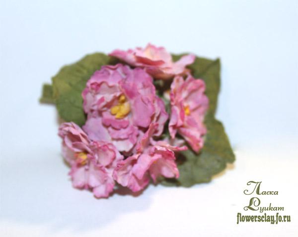 фиалки-розовые-11