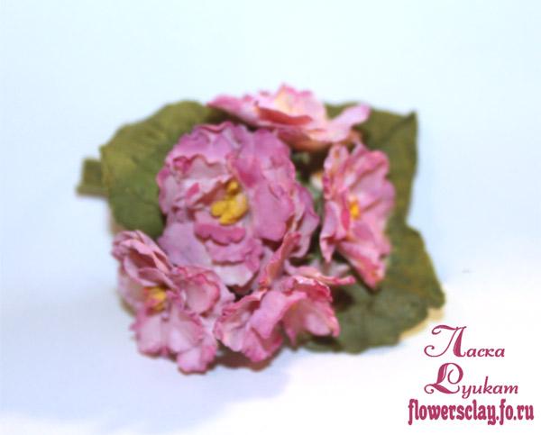 фиалки-розовые-22