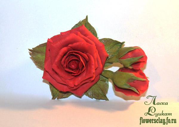роза-красная
