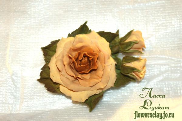роза-медовая2
