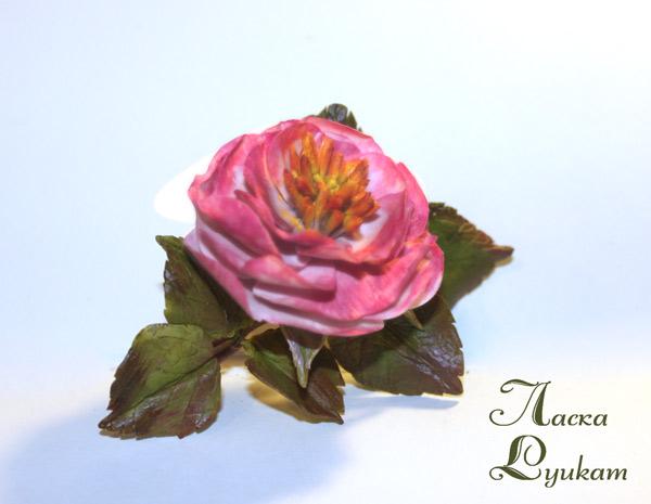 шиповник-розовый-махровый-4