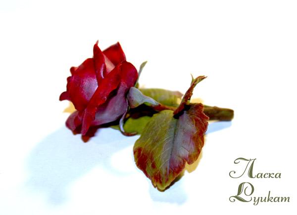 роза-красная-цветком