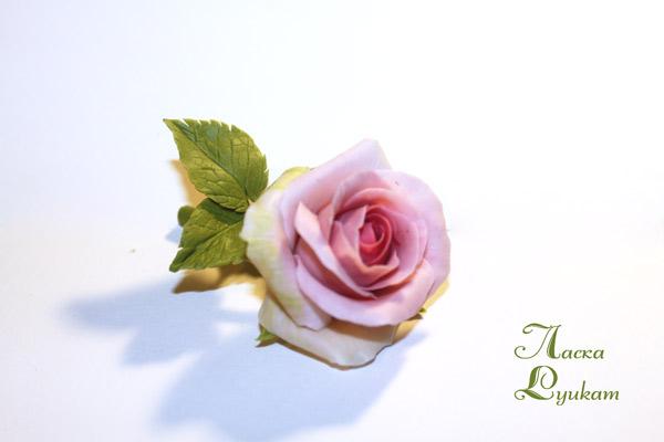роза-роз-бб-1