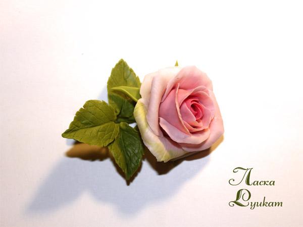 роза-роз-бб-2