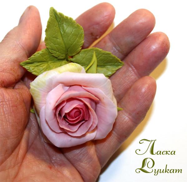 роза-роз-бб-3