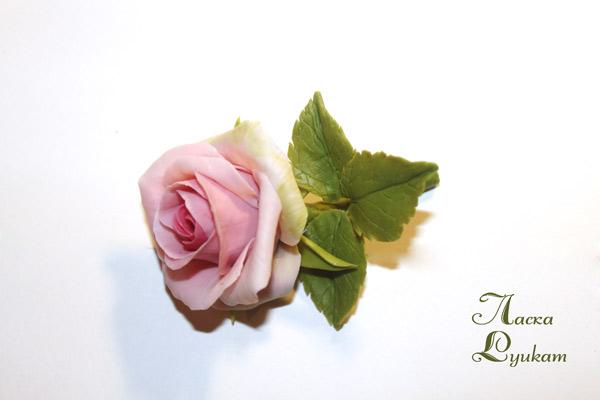 роза-роз-бб-4