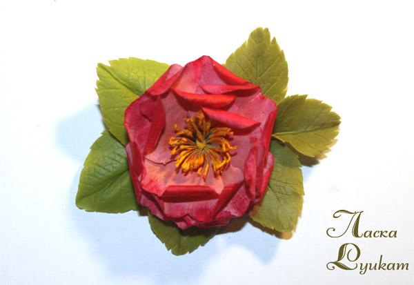 шиповник-махр-розовато-малиновый1
