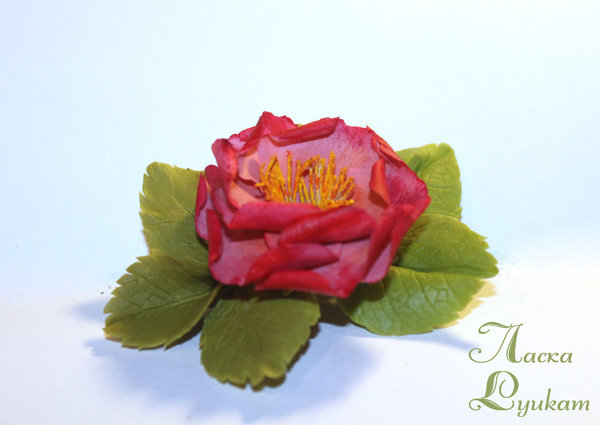 шиповник-махр-розовато-малиновый2