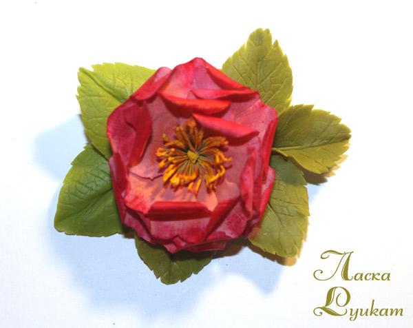 шиповник-махр-розовато-малиновый-3