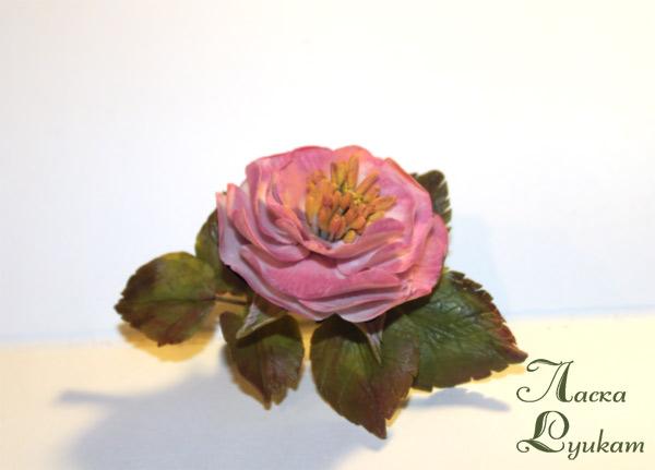 шиповник-розовый-махровый