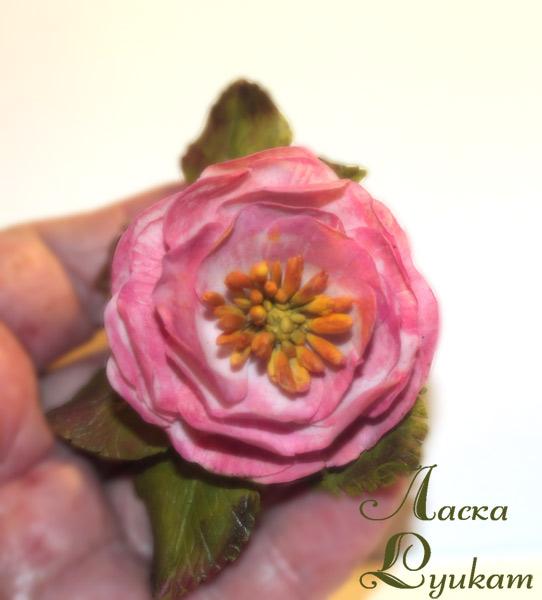 шиповник-розовый-махровый-1