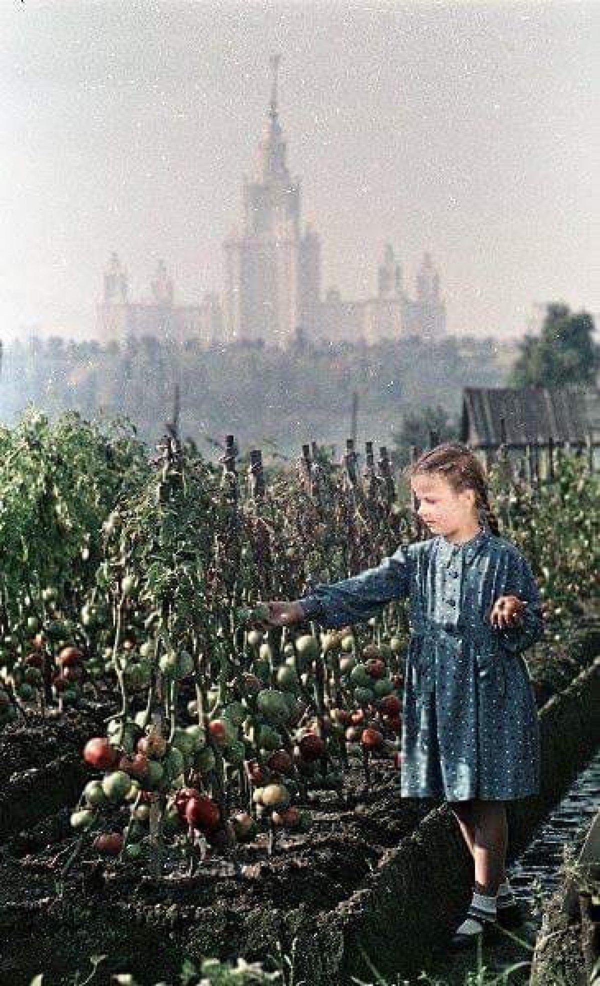 Не остатки ли это Пышкинских огородов напротив в Лужниках в 1953-м?