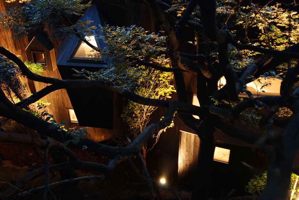 dancing_trees_singing_birds_hqroom_ru_12