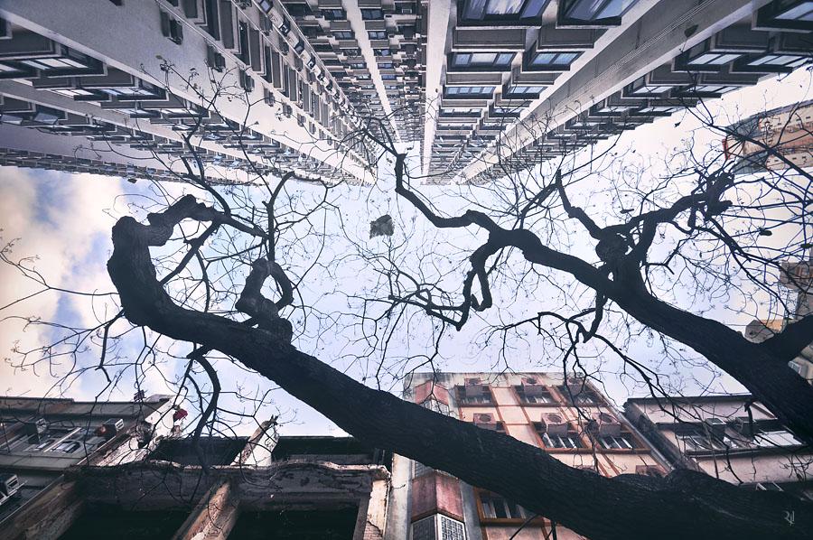 Hong-Kong-Scyscraper-Photos-03
