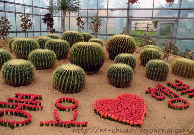 Дворец кактусов