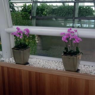 и орхидеи