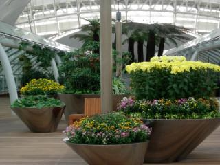 В Звездном саду цветут хризантемы