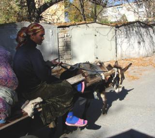 Даже в центральных районах Ташкента иногда можно увидеть ослика