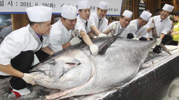 Голубого тунца стремятся истребить