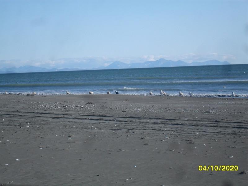 Чайки на берегу Олюторского залива