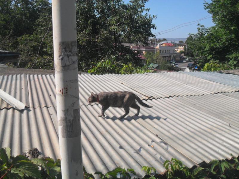 — Нет, — отвечала Кошка, — я, Кошка, брожу, где вздумается, и гуляю сама по себе.