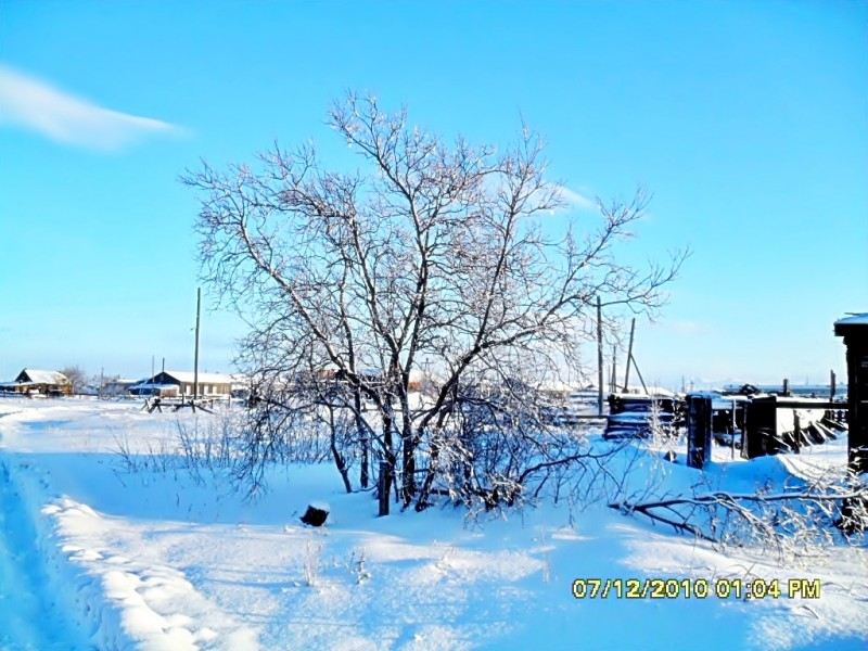 Камчатка Пахачи дерево снег зима