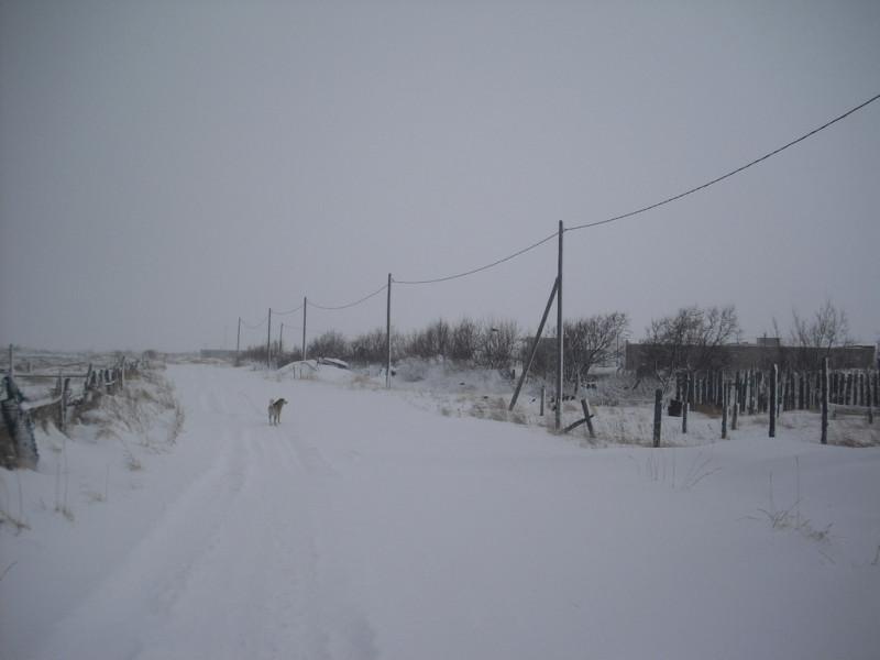 Камчатка Пахачи снег дорога собака